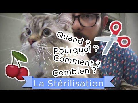 Comprendre Son Chat - Tout Savoir Sur La Stérilisation [Crêpe Au Citron]