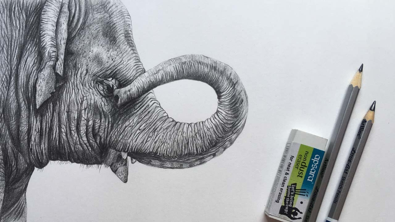Elephant Drawing   Elephant Face Pencil Sketch   Animal Drawing