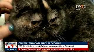 TVR 1 - Expozitia Felina Sofisticat - aprilie 2018