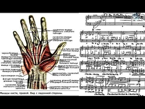 С чего начать обучение на пианино - с нот или с рук? Школа Юдиной Фрагмент вебинара