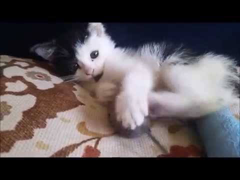 Rescued and Injured Feral Kitten Grows Up - TIME LAPSE