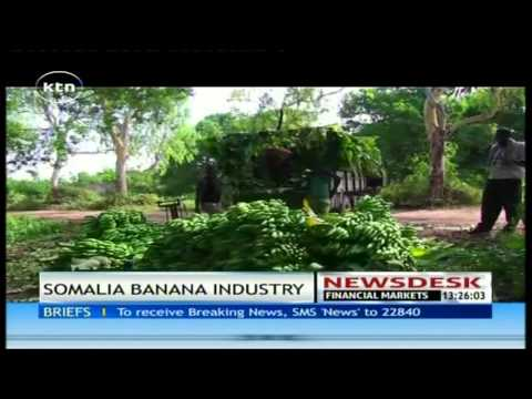 The banana in Somalia is back with focus on regaining its crown as leading banana exporter in E.A