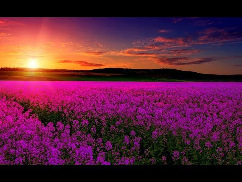 Relaxing Music For Emotional Healing & Detachment from Negativity | Boost Happiness & Inner Peace