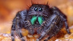 75 Facts about Spiders