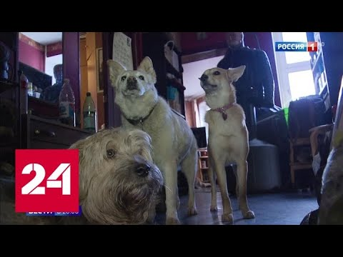 24 собаки в