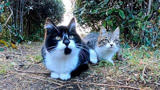 怖いけど気になる チョロチョロ走り回る子猫が可愛過ぎる