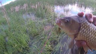 Ловля карася на поплавок городская рыбалка