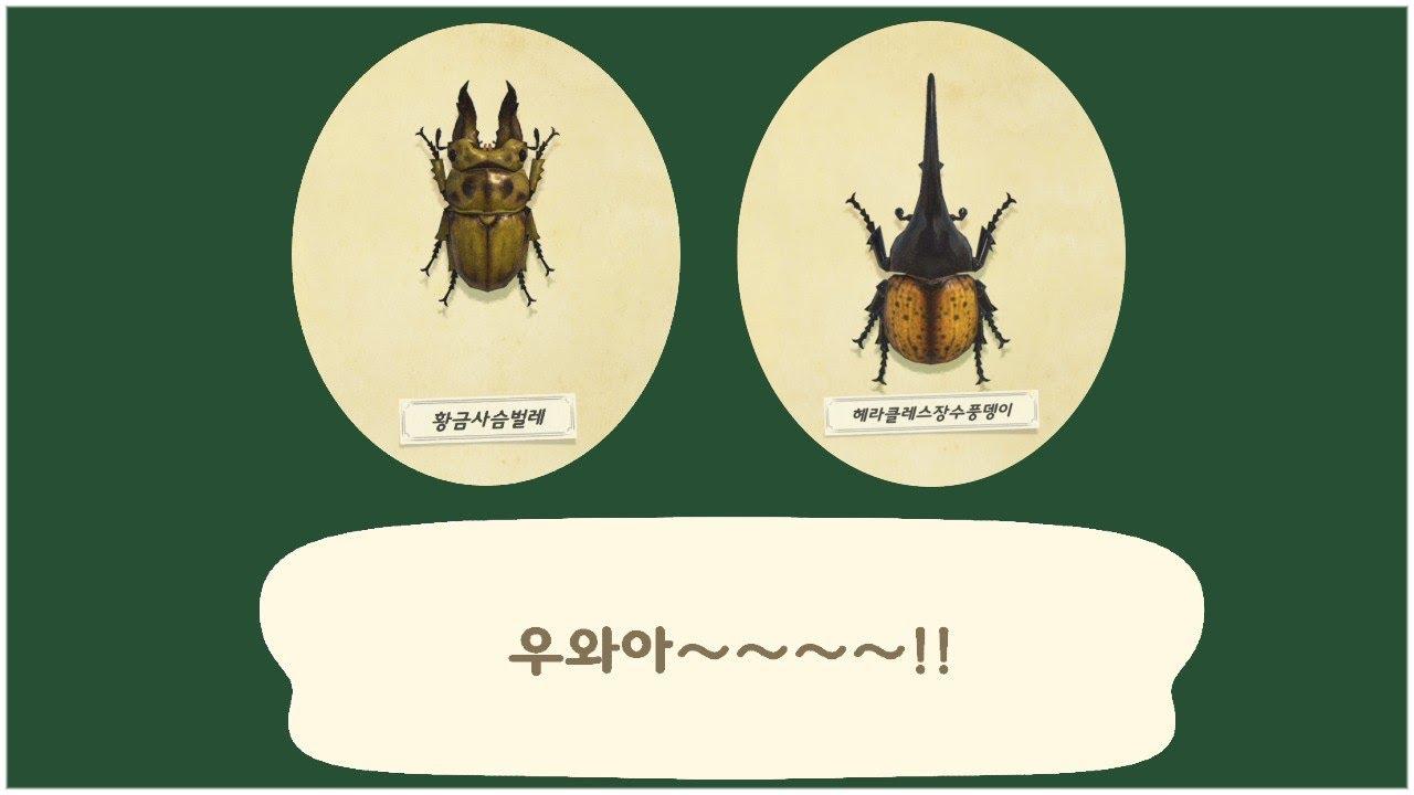 [모동숲] 굉장히 희귀한 여름의 뉴페이스 사슴벌레,풍뎅이들 잡는 팁!