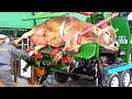 Modern Technology Automatic Cow Milking Mega Machine, Shoeing, Cleaning, Washing