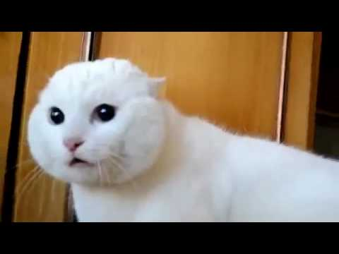 Cat Funny Animals Video So CUTE