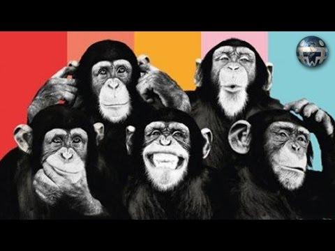 5 Affen - und die Konditionierung von Menschen