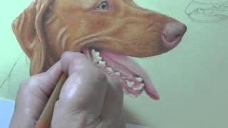 Hungarian Vizslas in Pastel Pencils - Speed Painting