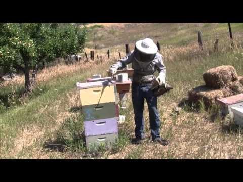 Organic Beekeeping 101 – Video 1 of 38 – Full Course at Organic Life Guru