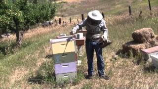 Organic Beekeeping 101 - Video 1 of 38 - Full Course at Organic Life Guru(Click here to get the complete Beekeeping 101 Videos: http://organiclifeguru.com/course/beekeeping-101-organic-natural-traditional/ In this beekeeping 101 ..., 2015-11-23T01:05:37.000Z)