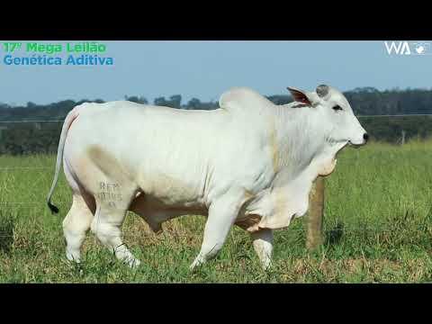 LOTE 21 - REM 10345 - 17º Mega Leilão Genética Aditiva 2020