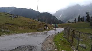 Horse riding in sonmarg, kashmir