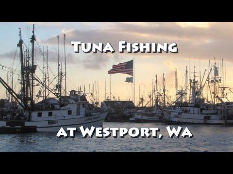 Tuna Fishing At Westport