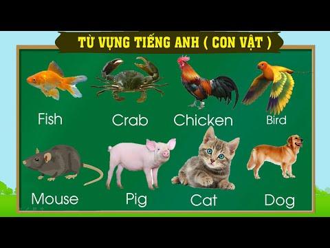 Thanh nấm - Học từ vựng tiếng anh qua các con vật quen thuộc (phần 1) / English vocabulary