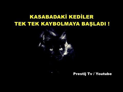 Kasabadaki Kediler Tek Tek Kaybolmaya Başladı - ( Yaşanmış Korku Hikayeleri )
