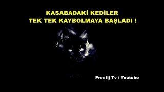 kasabadaki-kediler-tek-tek-kaybolmaya-balad-yaanm-korku-hikayeleri-