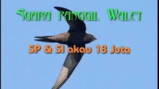 Download Lagu SUARA PANGGIL WALET || SP & SI AKAU 18 JUTA mp3