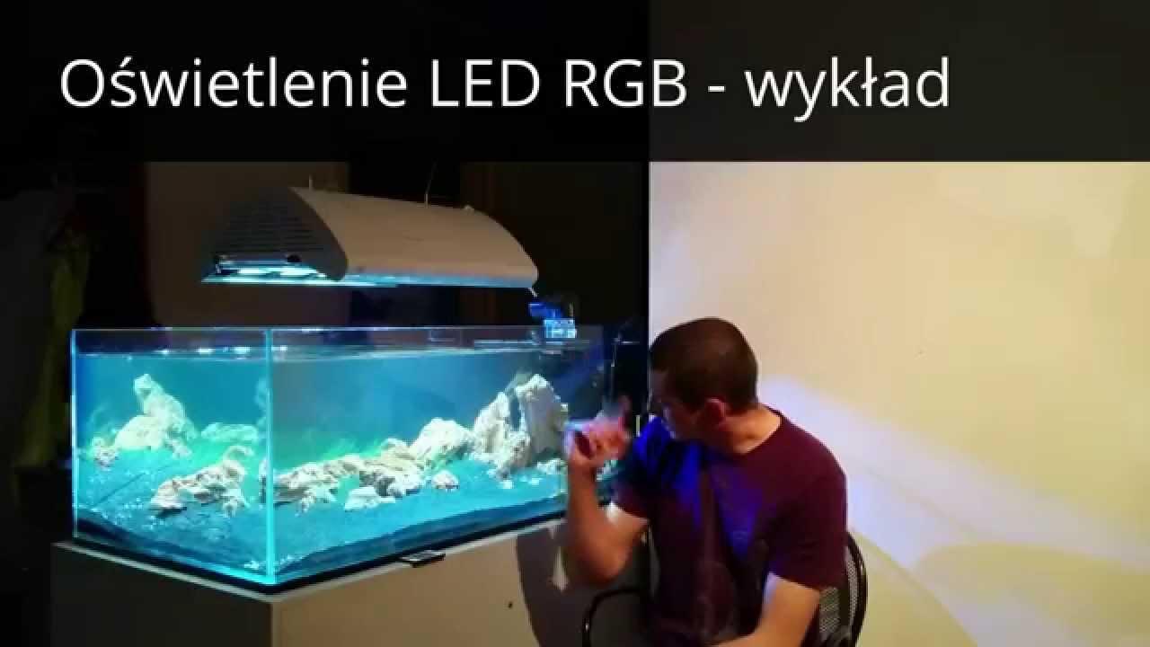 Oświetlenie Led Rgb W Akwarium Teoria I Praktyka By