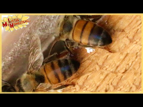 Weekly Peek    Artificial Flavoring Confuses Bees? & We get a Welcome Surprise :)