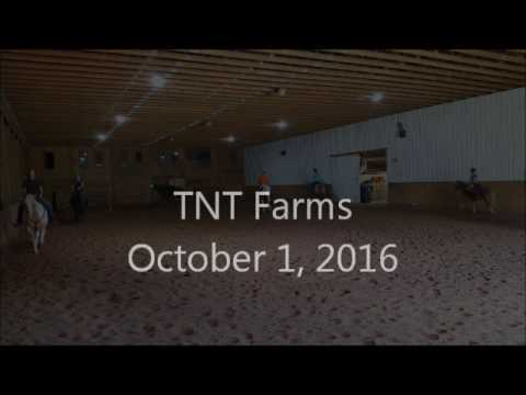 Tnt Farms- horse/pony games!