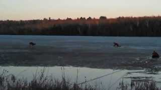 Deer rescued from thin ice