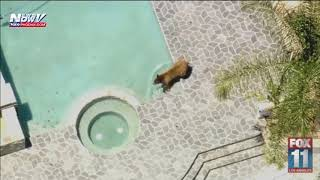 FOX 10 XTRA NEWS AT 7: Tale of the California black bear who took a dip in a pool