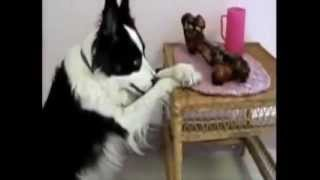 Dogs Saying Grace Before Meal Cutest video ever.