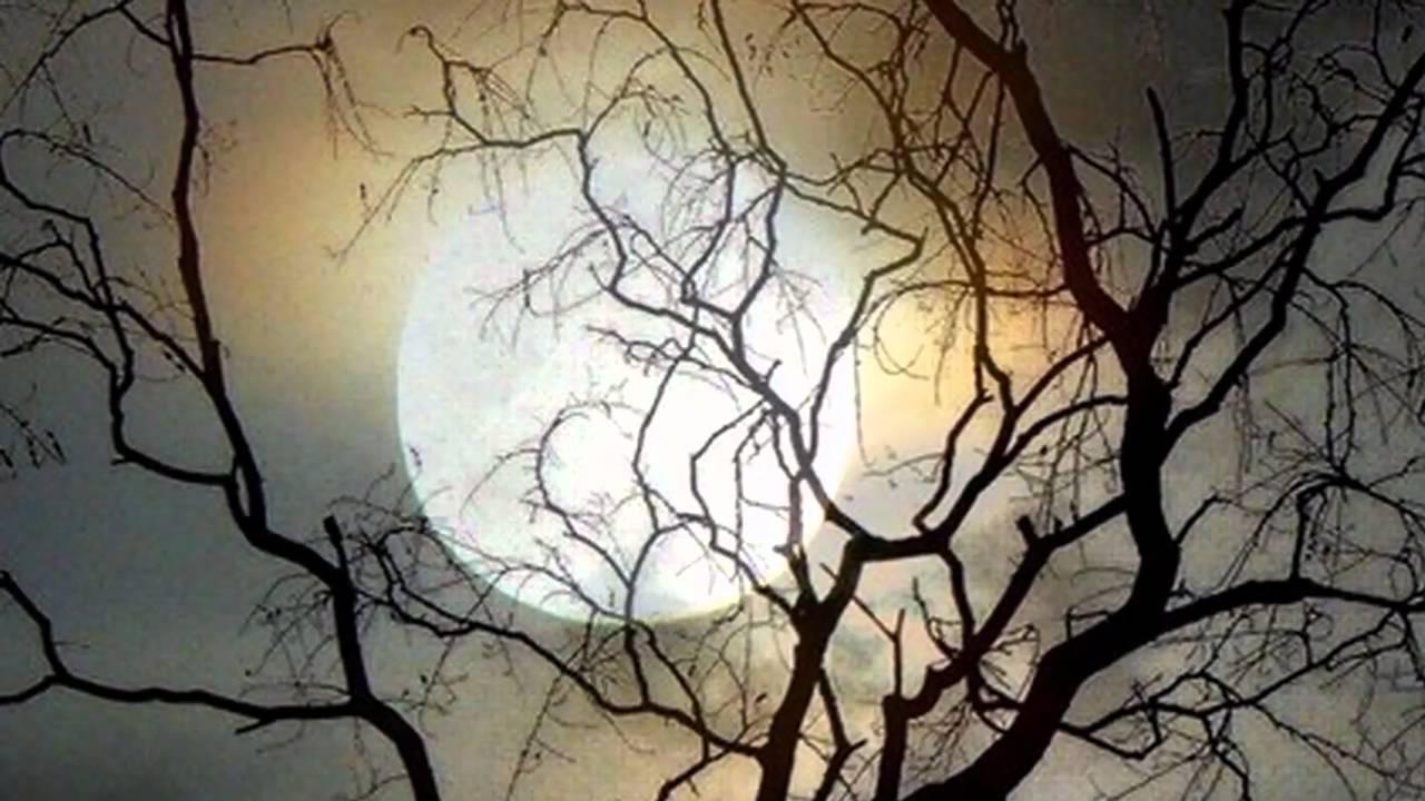 E S Posthumus - Moonlight Sonata