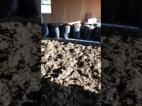 Air Drying CBD Biomass