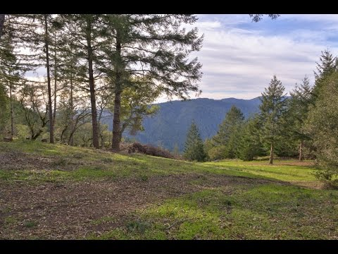 22453 Hwy 116 Monte Rio , Sonoma County LIsted for Sale