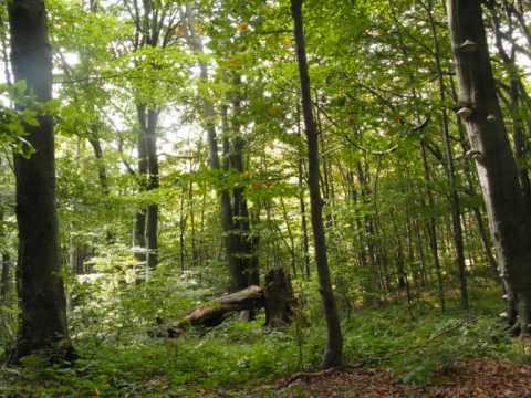 Pieśń o Nimrodel - GreenWood
