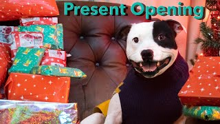 Christmas Presents Opening 2020 | Staffordshire Bull Terrier Dog