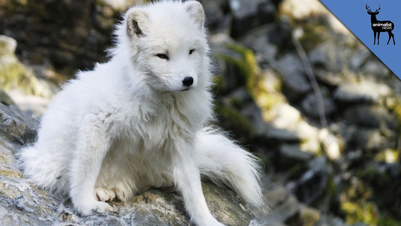 Top Five Cute Winter Animals!