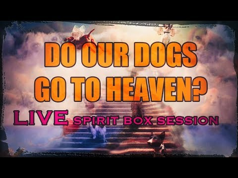 Do DOGS GO TO HEAVEN? A LIVE SPIRIT BOX SESSION that will touch your HEART.