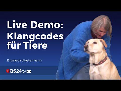 Klangcodes für Tiere Live-Vorführung | Sinn des Lebens | QS24 Gesundheitsfernsehen