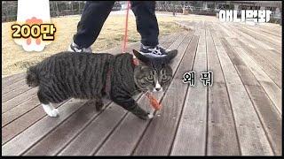 주택 살던 고양이가 아파트에 살게 되면서 생긴 일 ㅣ Cat The Walking Maniac Wakes Up A Butler At 2 am To Go For A Walk