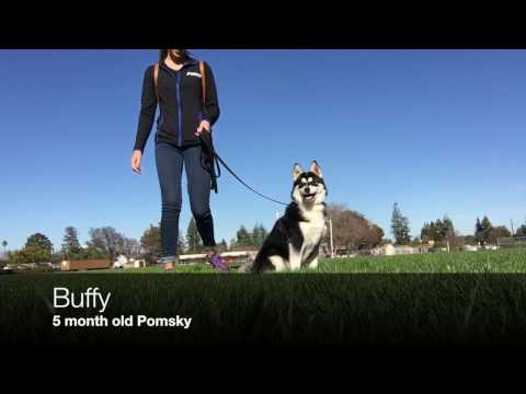 Dog Obedience Trainer Central MN   Dog Training Minnesota
