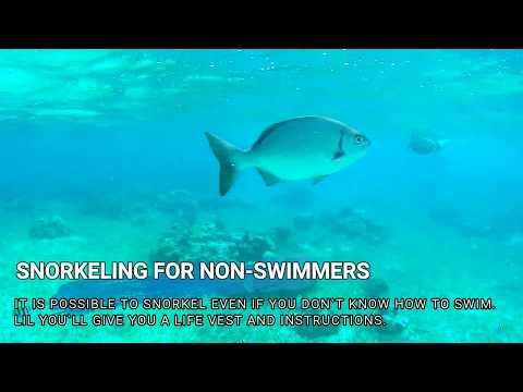 Lil Alphonse Snorkeling Tour, San Pedro Belize