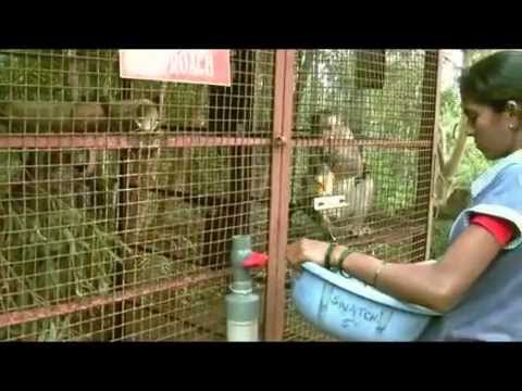 Day-to-Day Life at The Tree House (Save IAR Goa)