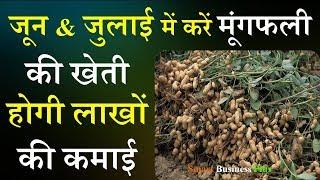 मूंगफली की खेती | मूंगफली की खेती कैंसे करें, होगी लाखों की कमाई | Smart Business Plus