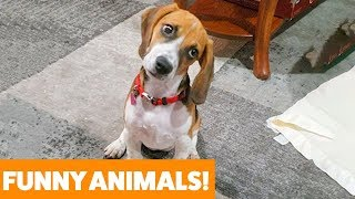 Download Funniest Pets & Animals of the Week   Funny Pet Videos Mp3 and Videos