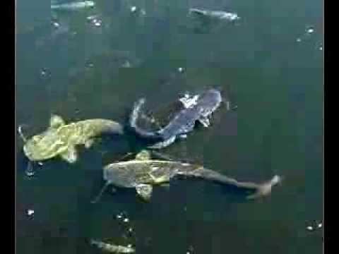 подкормка рыбы на реке летом
