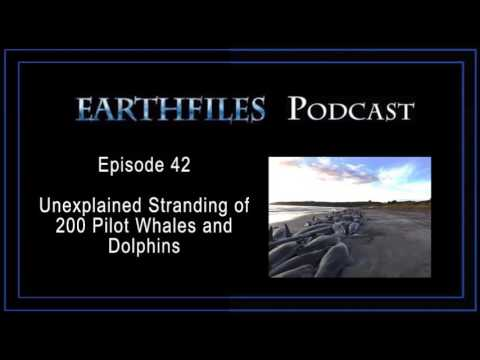 Earthfiles Podcast Episode 42 - Unexplained Stranding of 200 Pilot Whales and Dolphins