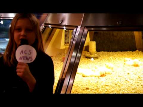 Avery Coonley School News visits the Museum of Science and Industry in Chicago