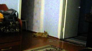 Кошачье карате Прикольно