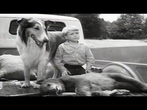 Lassie | The Archers | Full Episodes
